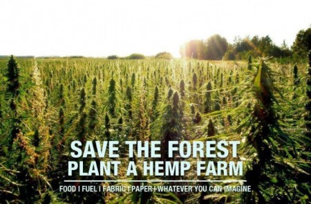Farmers Begin Planting Hemp Under New Colorado Hemp Legalization.