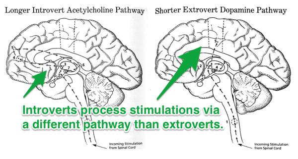 introverts-brains