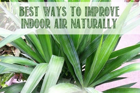Air Purification, Best Plants to Grow Indoors.