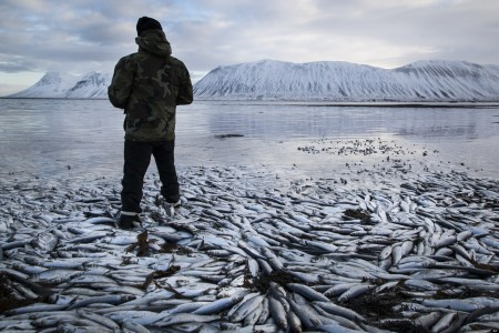 Mass Fish Deaths 2014 - Millions Have Been Found Dead All Over The World In The Past Months