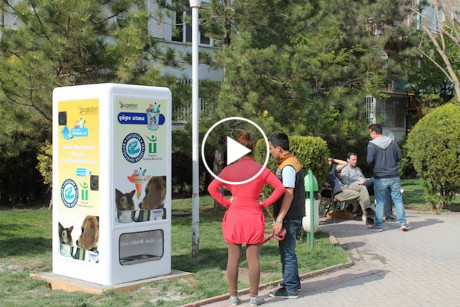 food and water stray dogs in exchange for recycled plastic bottles