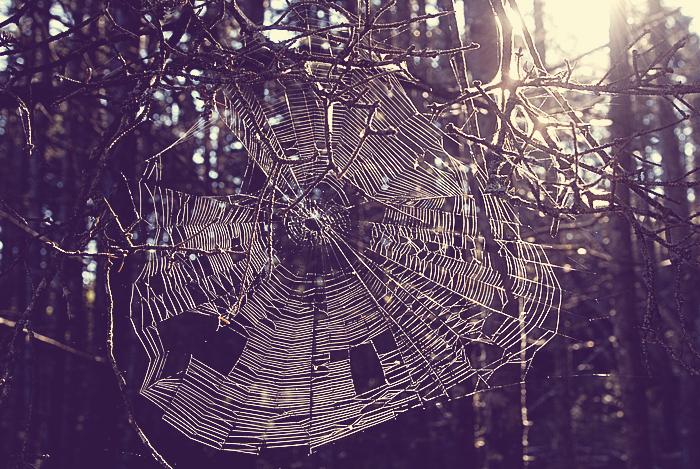 Spiders On Drugs.