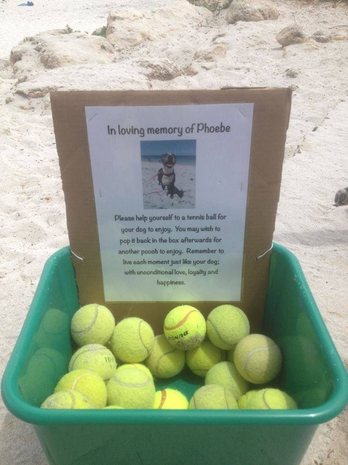 1. In Loving Memory Of Phoebe