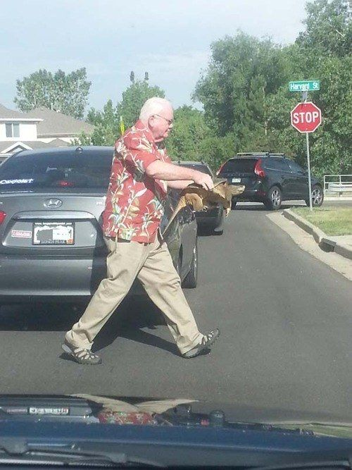 7. A man helps a turtle cross the road.