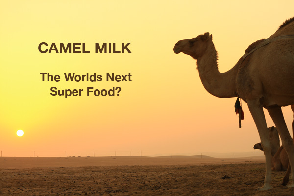 Camel Milk - The New Super Food