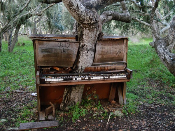 The old piano tree - California