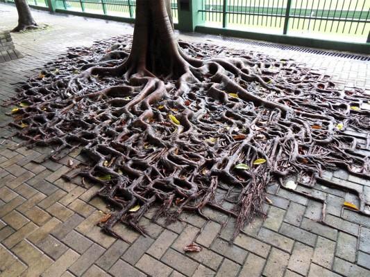 tree-533x400