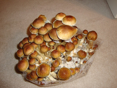 Magic Mushrooms Repair Brain Damage From Extreme Trauma