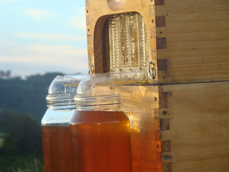 honey-on-tap-flow-hive-stuart-cedar-anderson-2