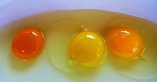 Can You Guess Which Of These Egg Yolks Is Actually From A HEALTHY Chicken