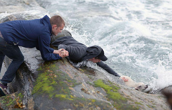 Two men save a lamb from drowning in the ocean.
