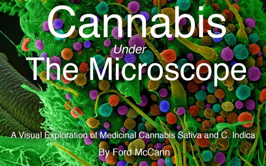 cannabis under the microscope