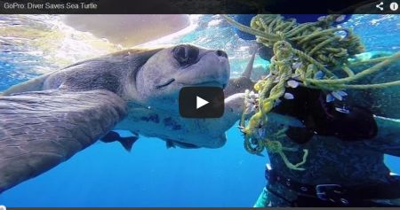 Trapped Sea Turtle Saved By Divers Gives Big Thanks To Rescuers