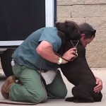 A Tough Prison Inmate Raised this Dog, but Watch what Happens when he Says Goodbye