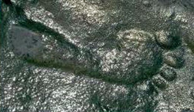 human footprint 290 million year old