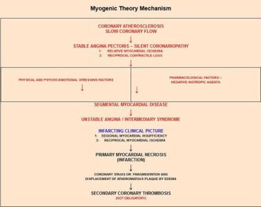 myogenic_theory_mechanism