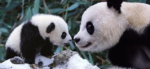 save pandas