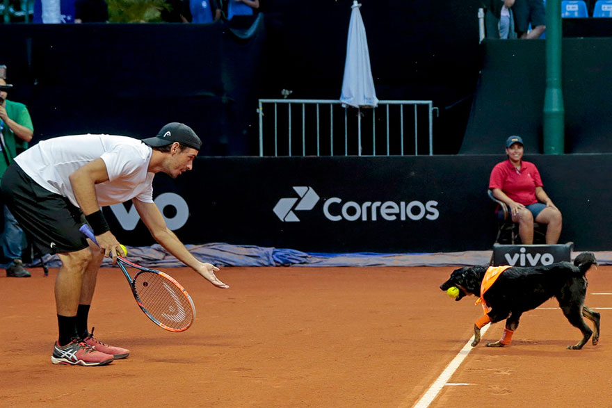 Brazil Open Tennis Tournament-ball-dogs-2