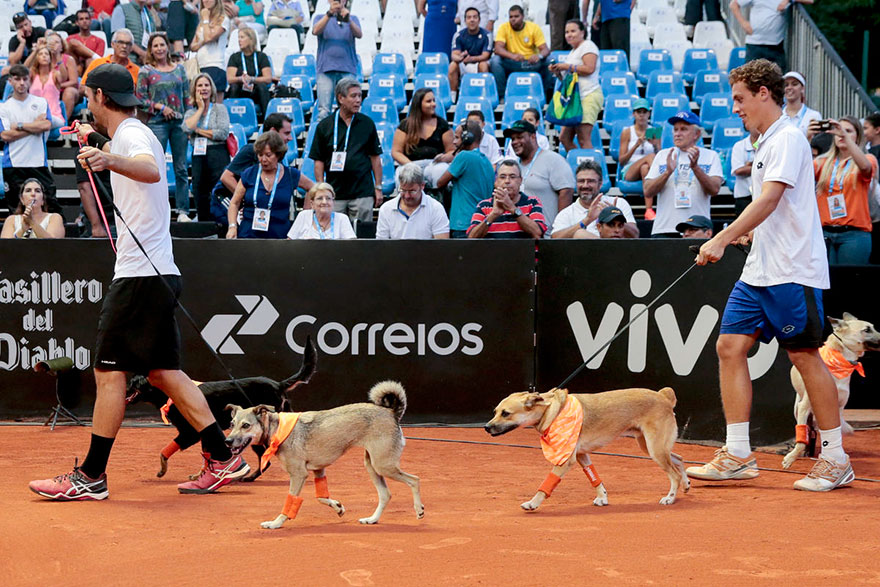 Brazil Open Tennis Tournament-ball-dogs-3