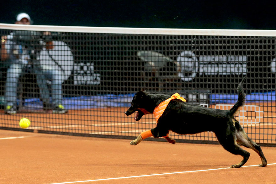 Brazil Open Tennis Tournament-ball-dogs-4