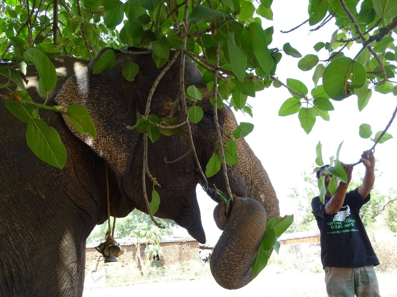 Rhea the elephant (4)
