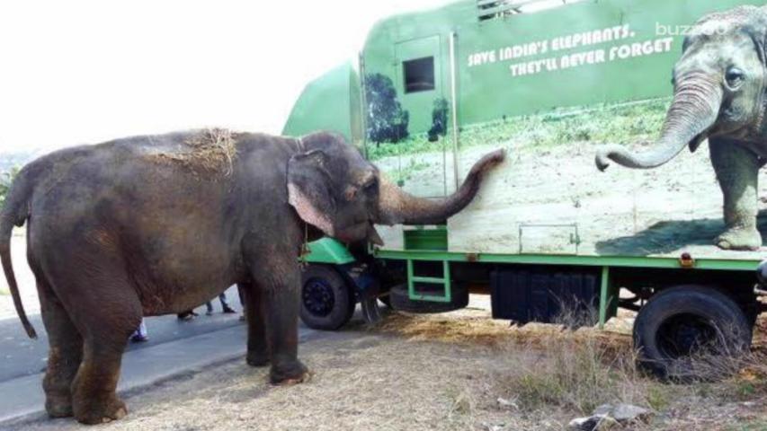 Rhea the elephant