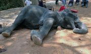 "Global grief for the elephant's death from appalling ""working"" conditions."