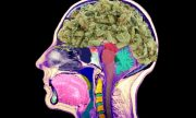 Study Reveals What Cannabis Does To Your Brain.