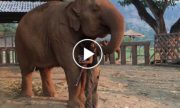 Elephant caretaker starts to sing, What happens next is amazing.