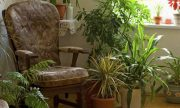 9 Houseplants That Clean The Air And Are Basically Impossible To Kill.