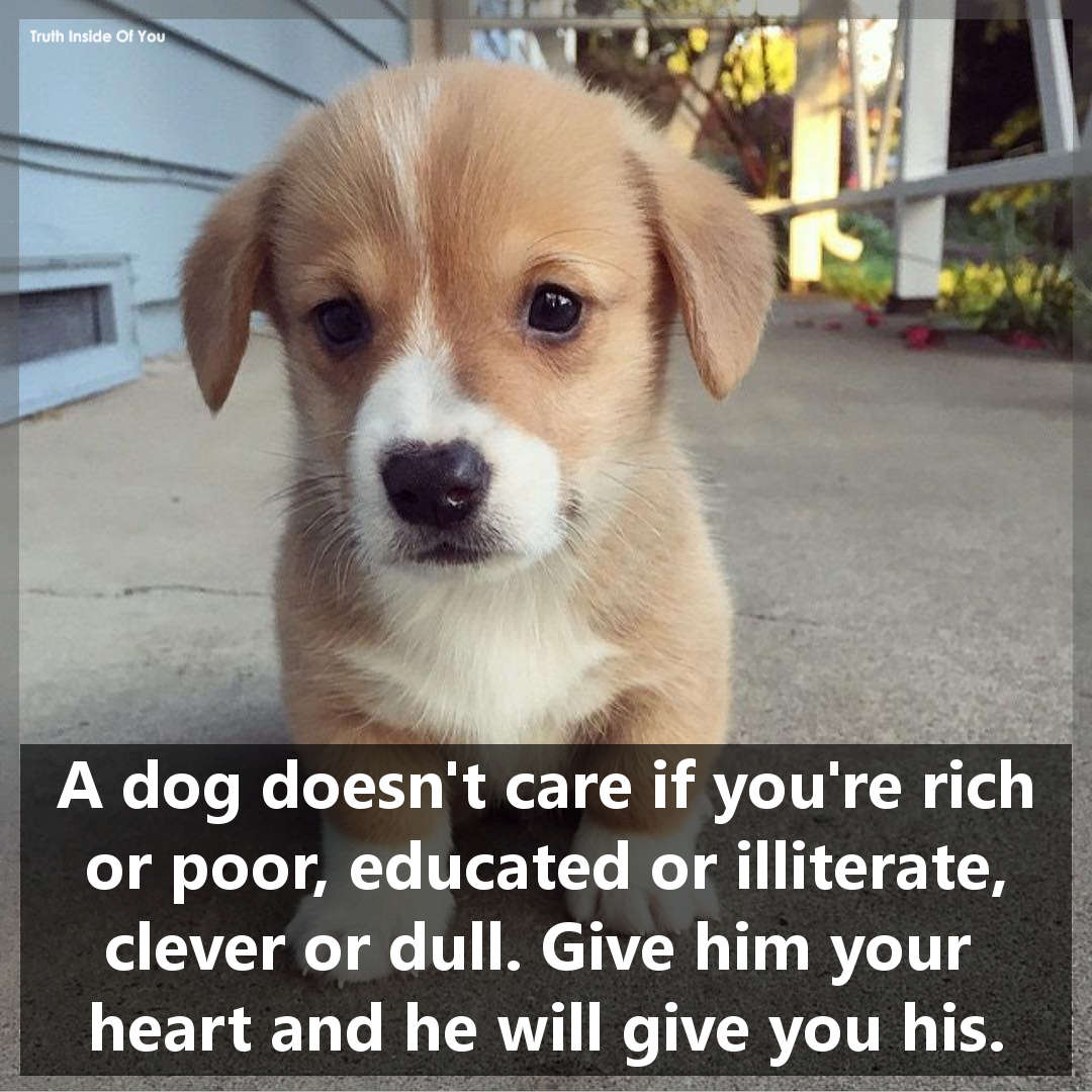 A dog doesn't care if you're rich or poor, educated or illiterate, clever or dull. Give him your heart and he will give you his.