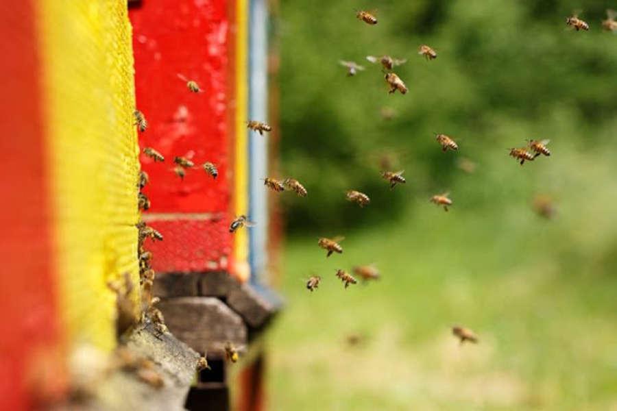Ban Bee-Killing Pesticides