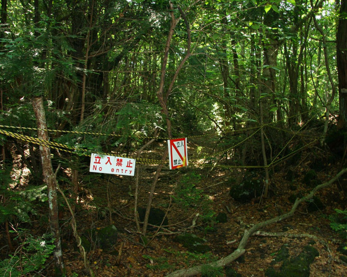 japan-s-infamous-suicide-forest-is