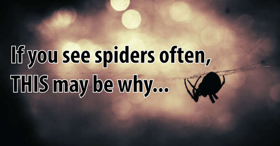 If You Are Seeing Spiders All The Time, This Is What It Means
