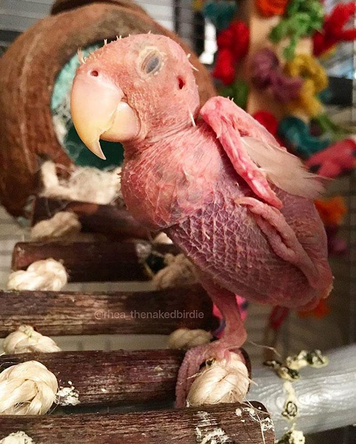 lovebird13