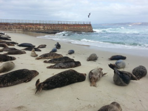 "Massive die-off of sea lions along the west coast has left scientists ""baffled."" Might it have something to do with the hundreds of tons of radioactive waste that has been pouring into the Pacific each day for four years?"