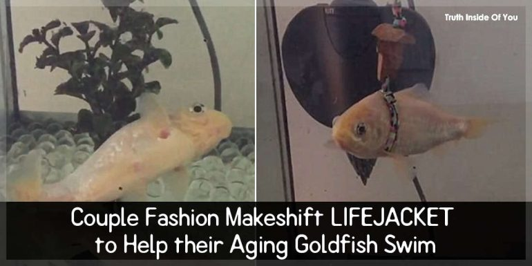Couple Fashion Makeshift LIFEJACKET to Help their Aging Goldfish Swim