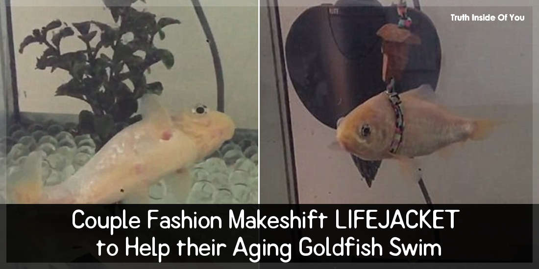 Couple Fashion Makeshift LIFEJACKET to Help their Aging Goldfish Swim