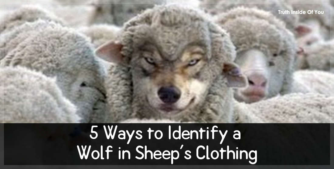 5 Ways to Identify a Wolf in Sheep's Clothing