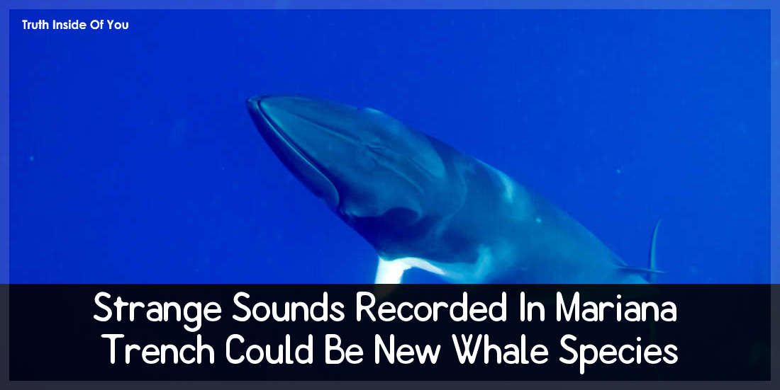 Strange Sounds Recorded In Mariana Trench Could Be New Whale Species