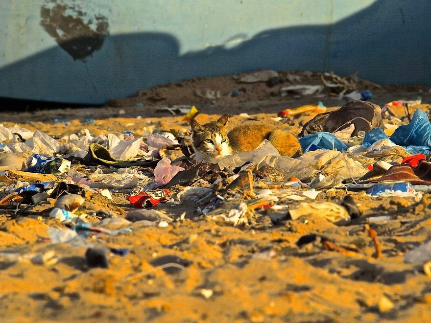 Cat Sunning In Trash