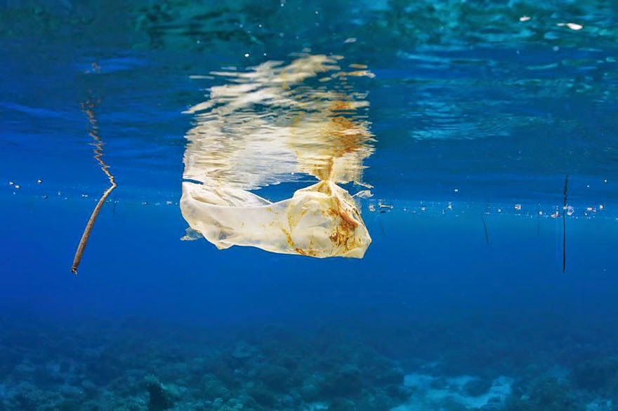Plastic Bag Floating In The Sea
