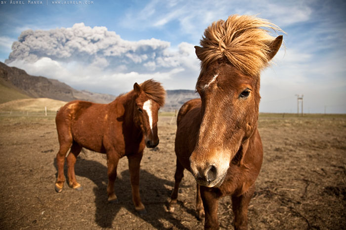 The 80s Duo Horse Pop Band From Iceland