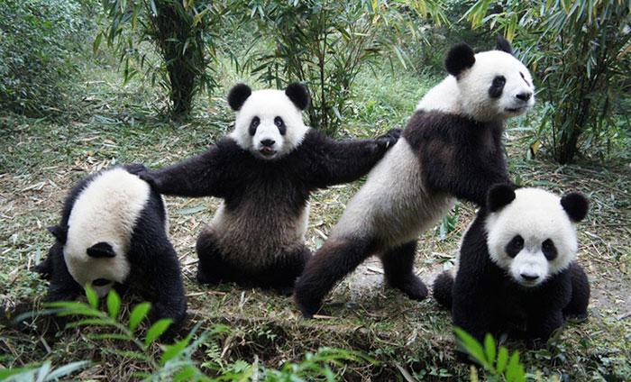 Wu Pand Clan