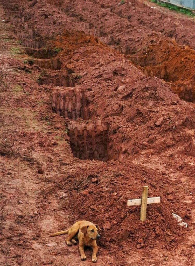 "30 of the most powerful images of all time - A dog named ""Leao"" sits for a second consecutive day at the grave of her owner"