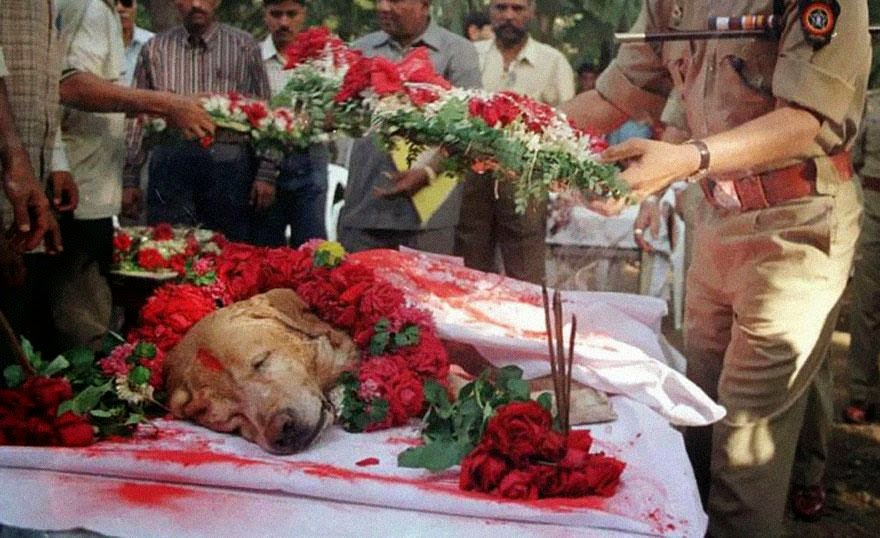 30 of the most powerful images of all time - Zanjeer the dog saved thousands of lives during Mumbai serial blasts