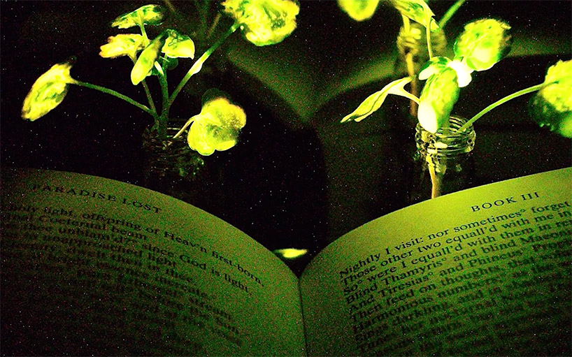 MIT Engineers Create Glowing Plants to Replace Electrical Lamps.