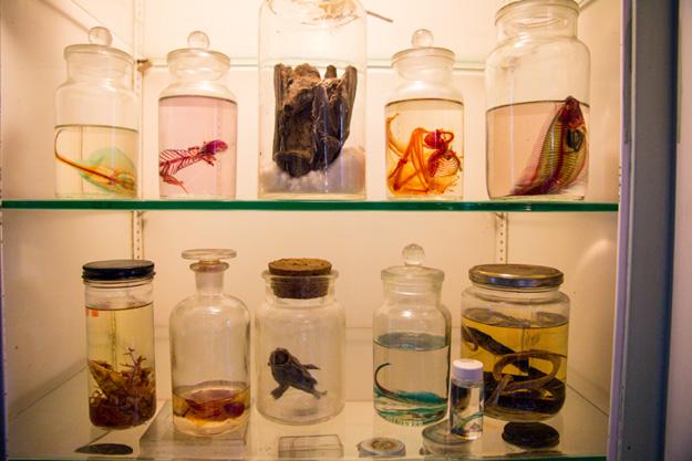 Morbid-Anatomy-Museum - 10
