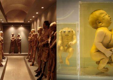 Morbid Museums