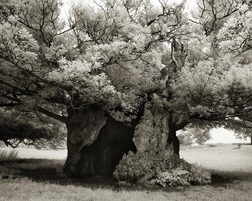 Ancient-Trees-21